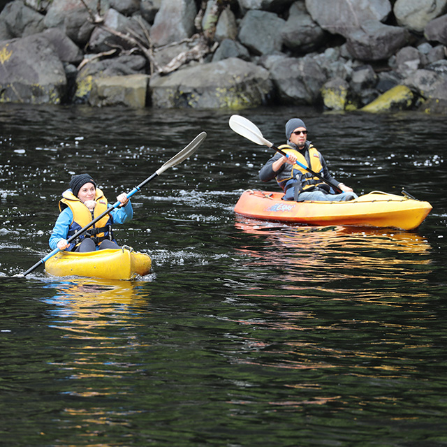 A male and female kayaking on two yellow kayaks in Doubtful sound.